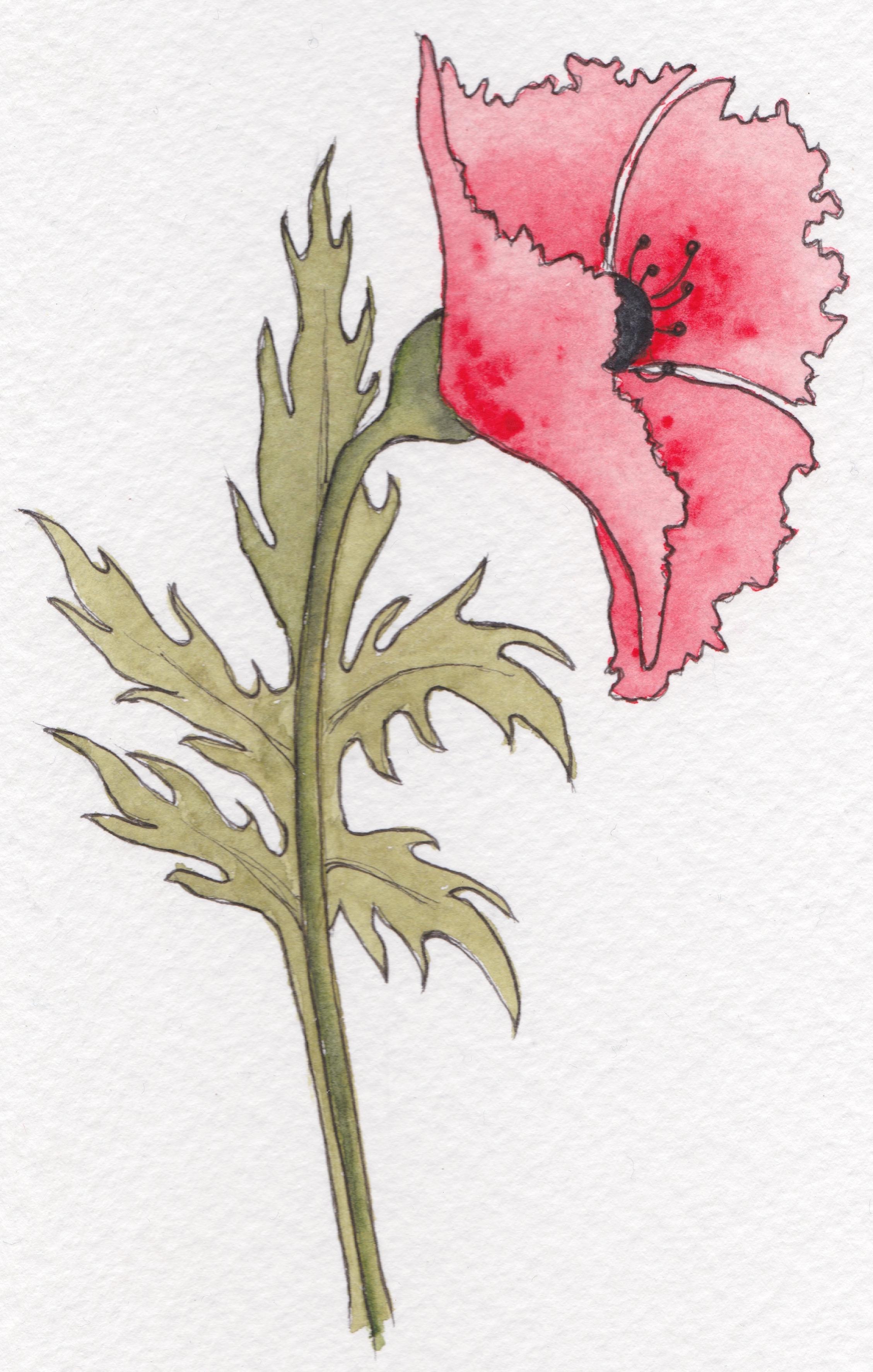 WW1 poppy right copy
